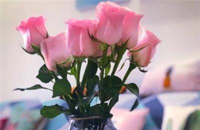 粉玫瑰花语是什么?粉玫瑰的寓意是什么?