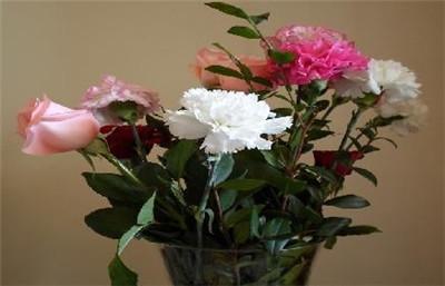 康乃馨的花语是什么?康乃馨的寓意有哪些?