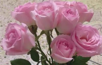 21朵粉玫瑰花语是什么?
