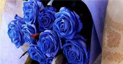 蓝玫瑰花语是什么?蓝玫瑰适合送给什么人