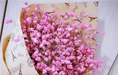满天星花语是什么?不同颜色的满天星花语是什么