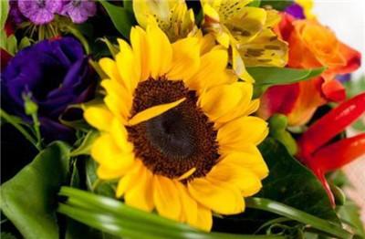 向日葵花语是什么?向日葵有什么寓意