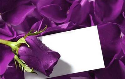 紫色玫瑰的花语