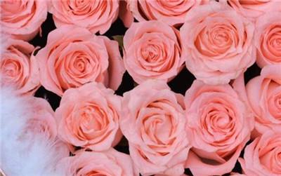 粉玫瑰不能随便送人