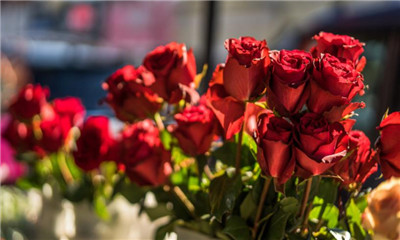 25朵玫瑰花语