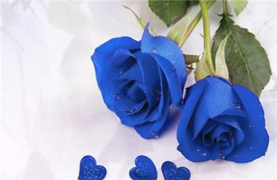 蓝色玫瑰花语